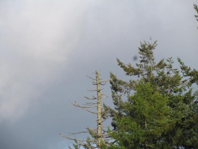 osprey nest 2