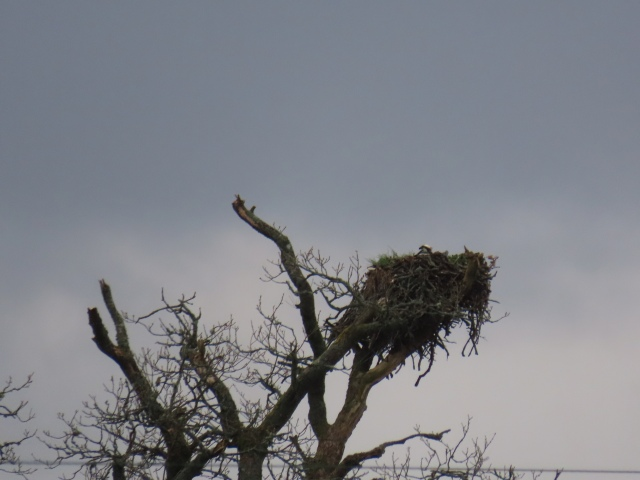 osprey 1 may 2019