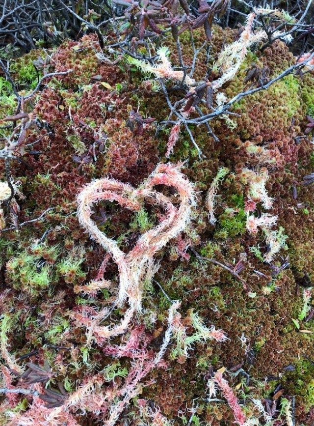 Treating Moss with love (Photo Lisa O'Brien)